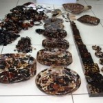 Decomisan artesanías fabricadas con concha de carey
