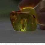 Descubren cochinillas de hace 23 millones de años en ámbar de Chiapas